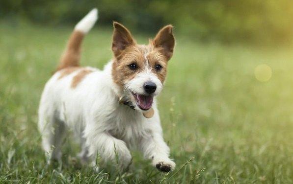 草の広場で走り回る犬