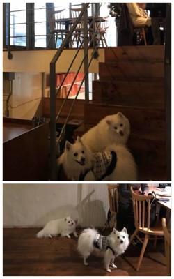 レストラン店内に犬