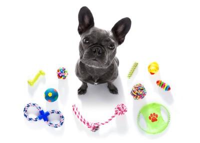 たくさんの種類のおもちゃと座ってこちらを見上げる犬