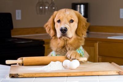 パスタ調理中の犬