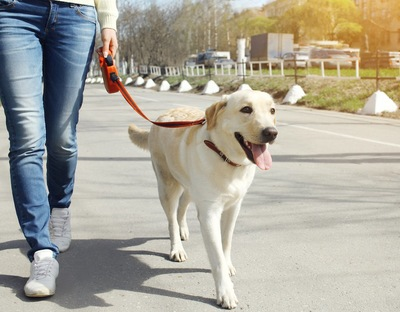赤いリードをつけて飼い主と散歩する犬