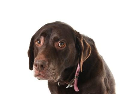 怖がって不安そうな表情をする犬