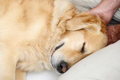 耳を撫でられる犬