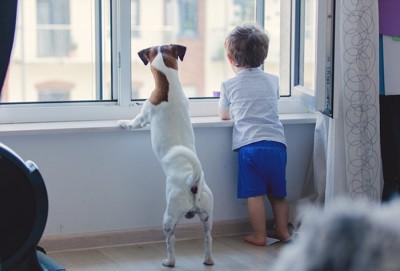 同じ格好で窓の外を見る子どもと犬の後ろ姿
