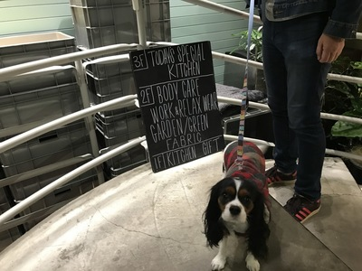 階段の踊り場に犬