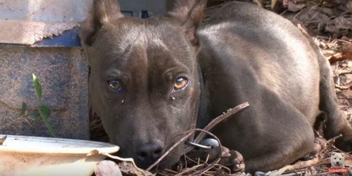 震えながら見つめる犬