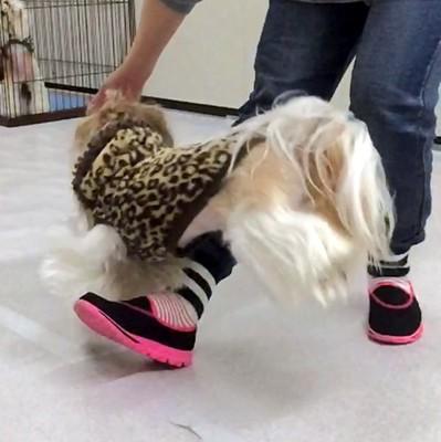 ドッグダンスでの愛犬のジャンプ
