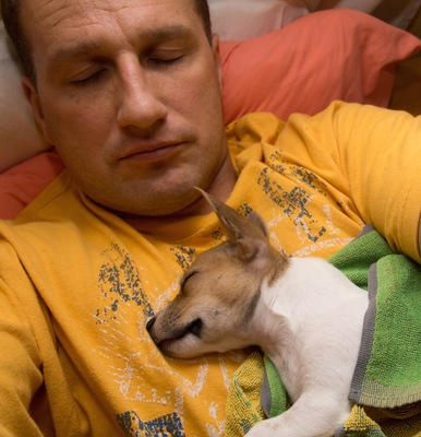 男性の胸の上で眠る子犬