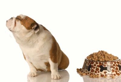 フードから顔を背ける犬