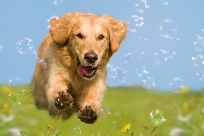 嬉しそうに走る犬