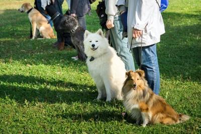しつけ教室の飼い主と犬たち