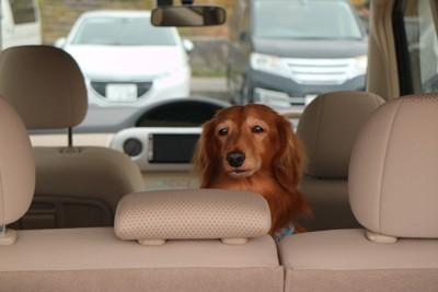 車の中で不安そうな犬