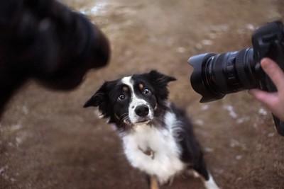 カメラのレンズに怯える犬