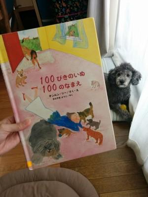 絵本を気にする犬