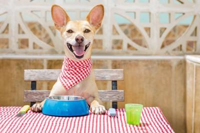 テーブルで食事を待つ犬