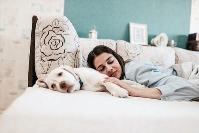 ベッドで眠る犬に寄り添う女性