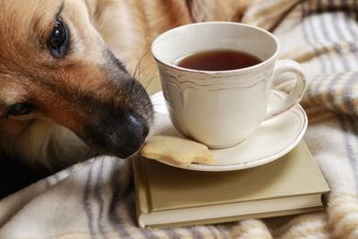 紅茶とクッキーの匂いを嗅ぐ犬