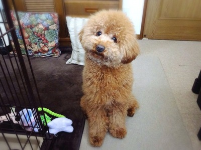 不思議そうな犬の表情