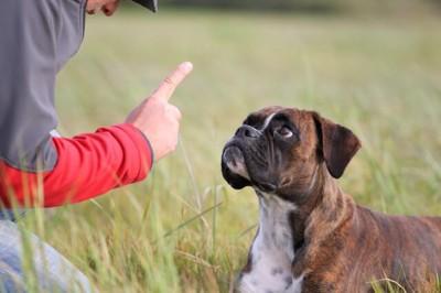 拾い食いを直すしつけ中の犬