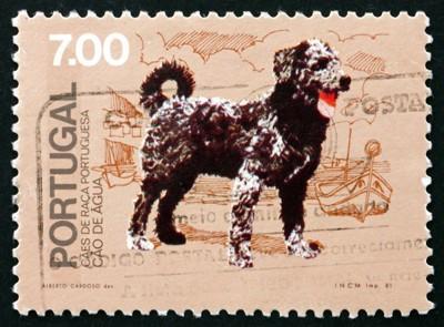 切手に描かれたポーチュギーズウォータードッグ