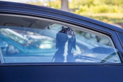 少し開いた車の窓から外の空気を吸う犬