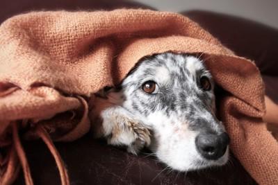 寂しそうな表情をしている犬