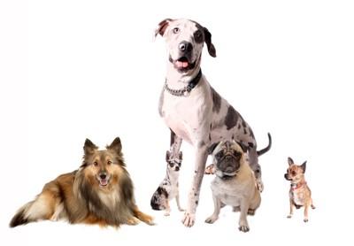 さまざまな犬種