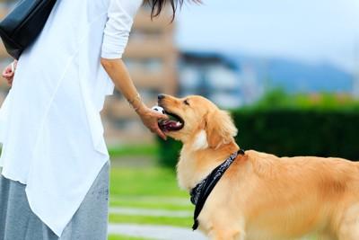 ボールを飼い主に渡す犬