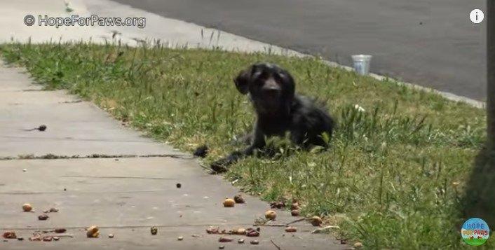 街路樹のそばで休む犬