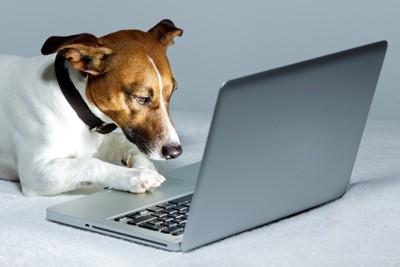 PCで調べ物をする犬