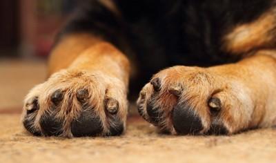 犬の両手の爪