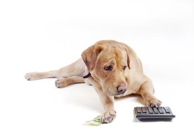 お札と電卓に手を乗せる犬