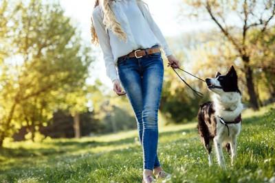 芝生を散歩する女性と犬