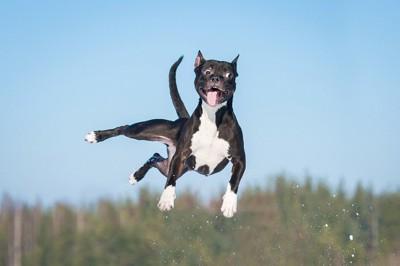 跳び上がる犬