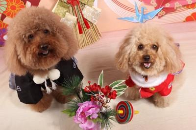 正月のコスチュームを着ている犬