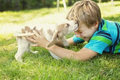 じゃれあって遊ぶ子犬と男の子