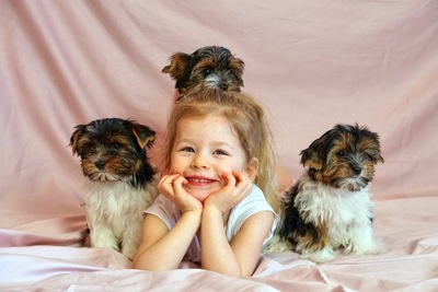 女の子と子犬3匹