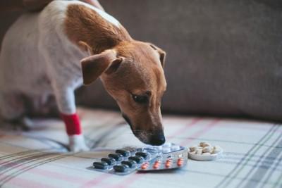 いろんな薬を見つめる犬