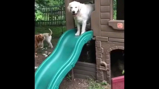 滑り台の上に立つ犬