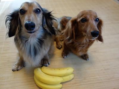 犬とバナナ