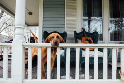 1階のベランダからこちらを見る犬