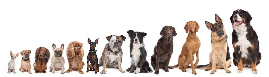 横に並んだたくさんの種類の犬