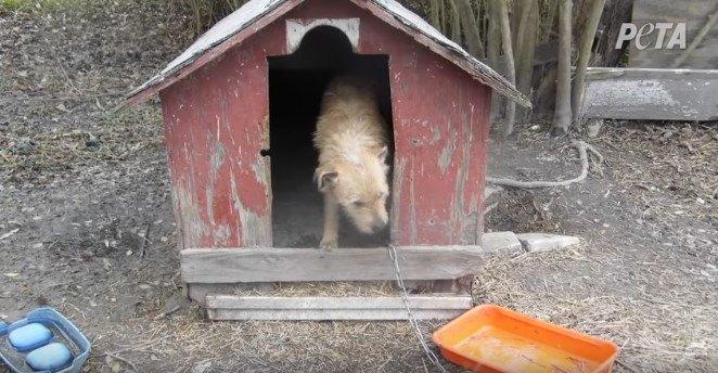 小屋の中に立つ犬