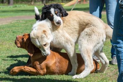 重なる3匹の犬