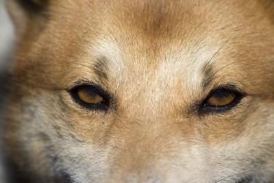 鋭い犬の視線