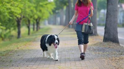 女性とお散歩中の犬