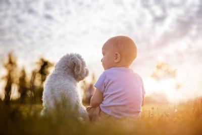 夕日に照らされる赤ちゃんと犬
