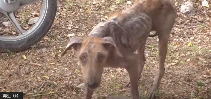 皮膚病を患う犬