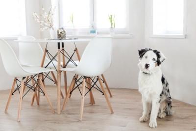 テーブルの横に座る犬