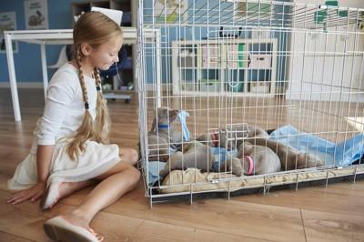 ケージの中に入っている子犬たちを見つめる女の子